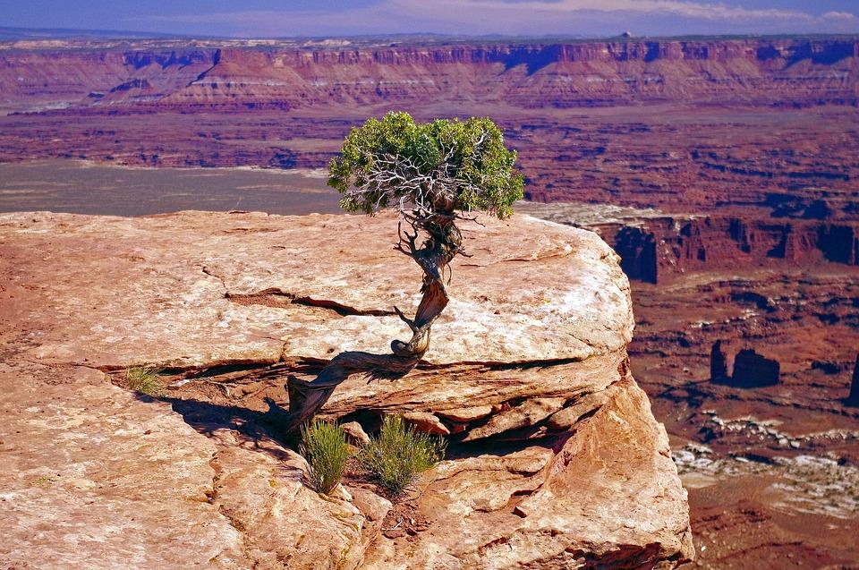 utah blockchain gnarled juniper